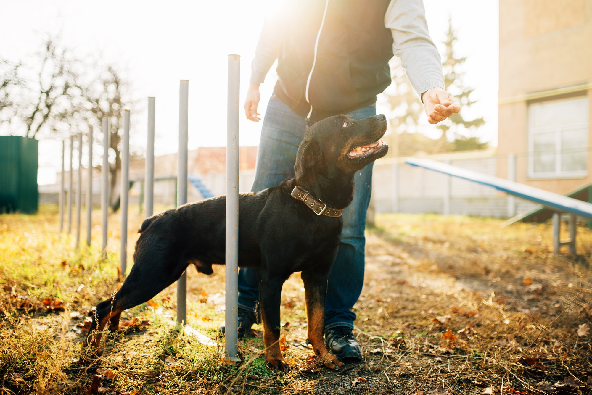 Cynologist with sniffing dog, training outside