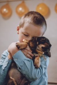 Giving puppy as gift. Kid, little boy getting surprised with dachshund puppy. Pet Lovers, Animal