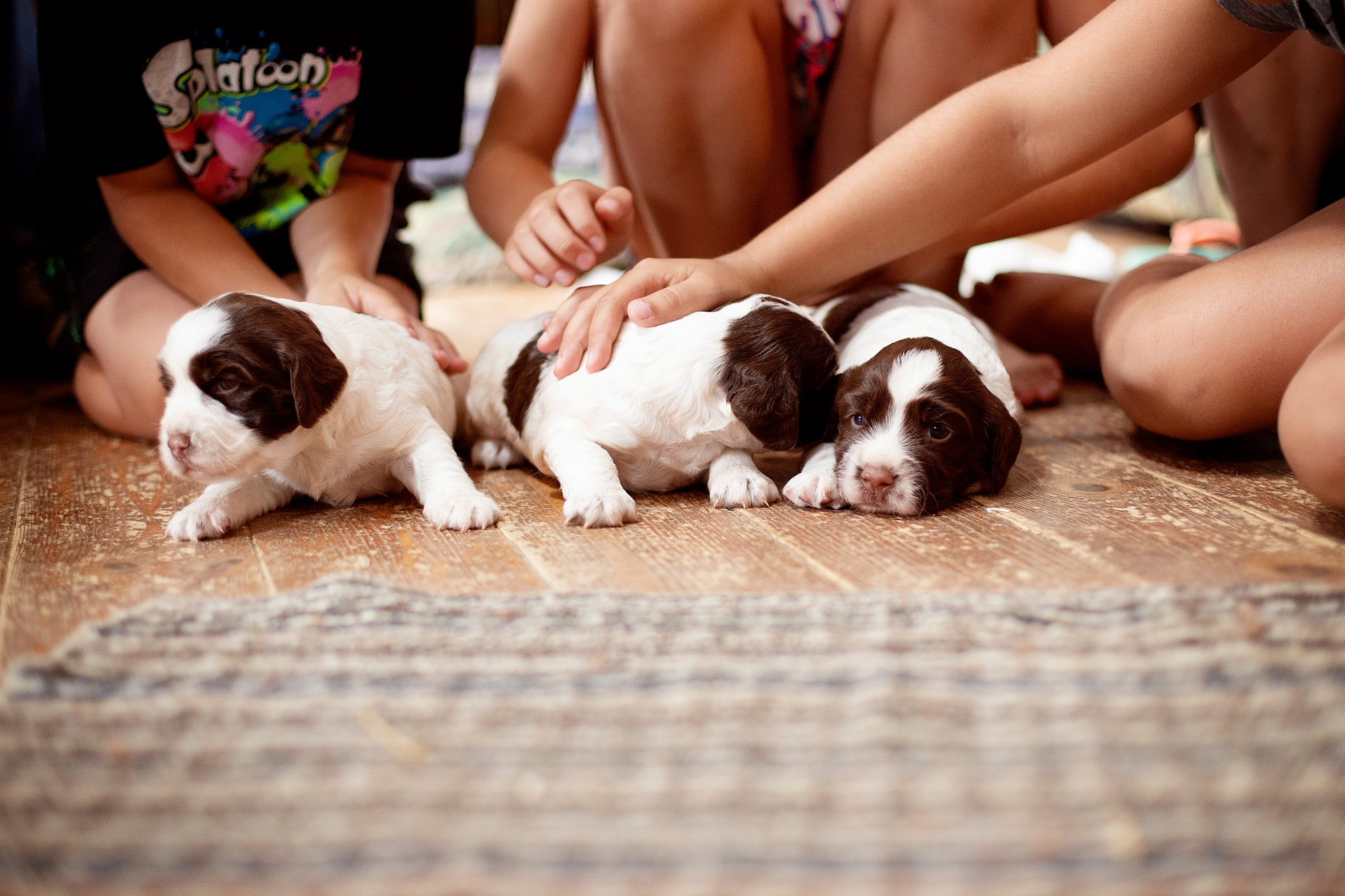 Puppies with kids, trying to pet the puppies