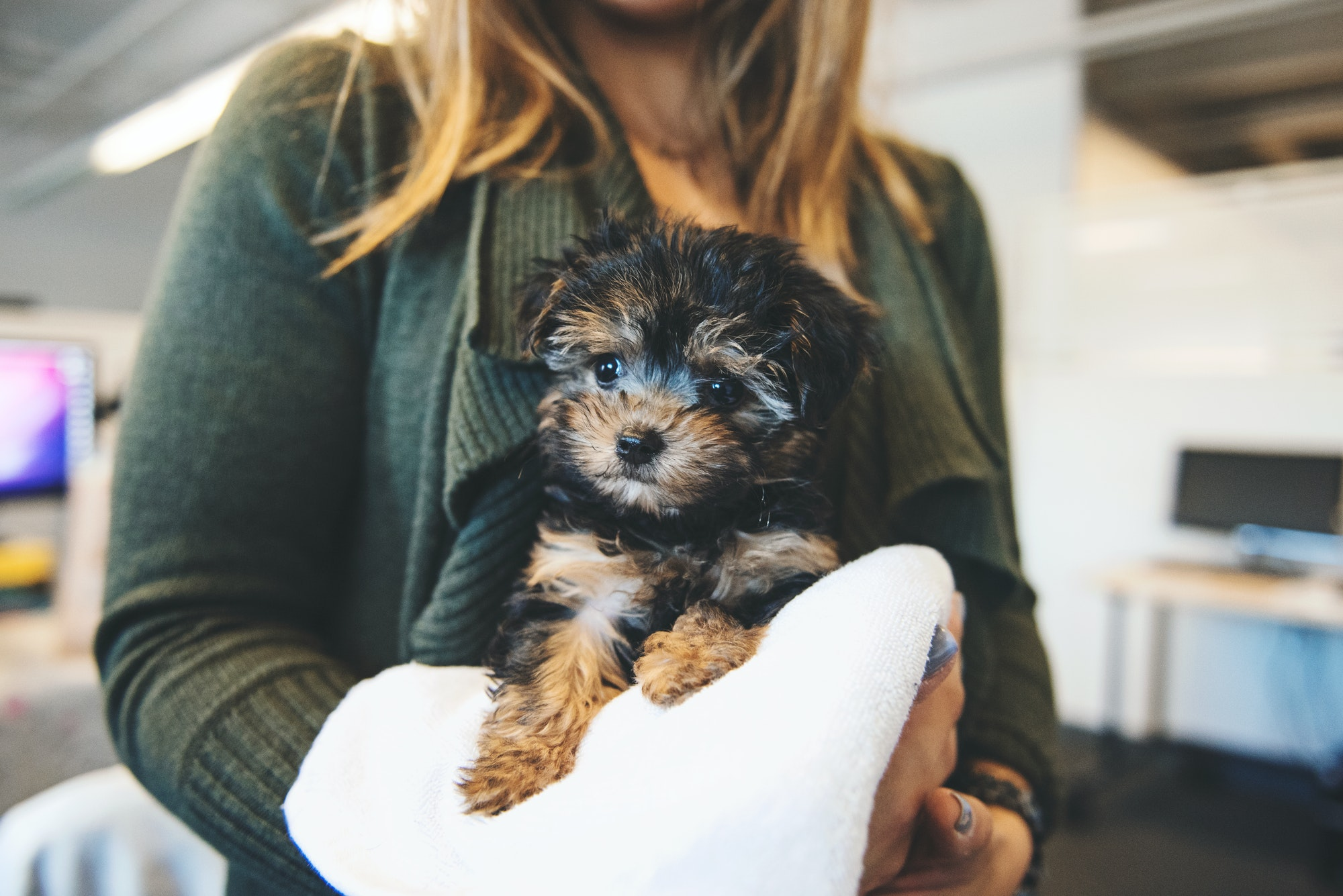 Buying Your Very Own Puppy