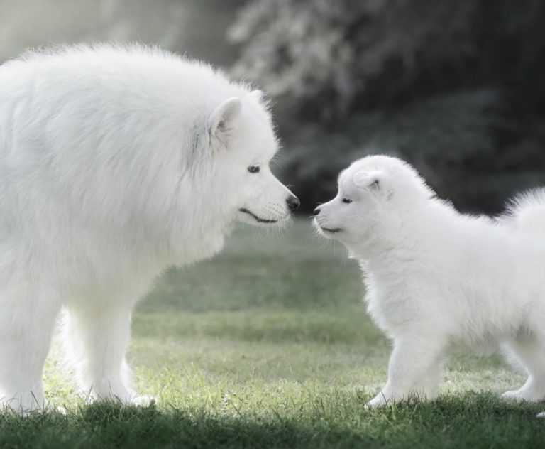 Should You Get a Puppy Or an Adult Dog?