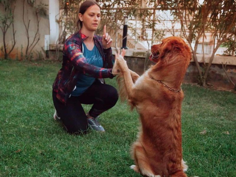 How To Effectively And Efficiently Train Your Dog