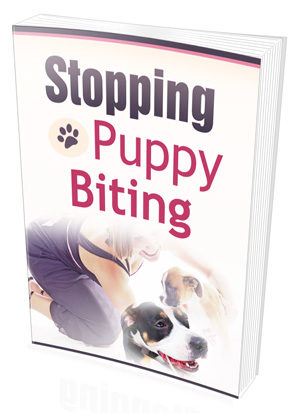 Stopping Puppy Biting